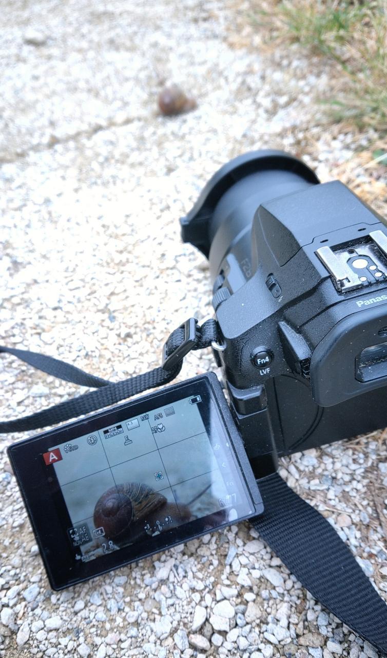 Photo d'un appareil en train de viser une escargot traversant le chemin